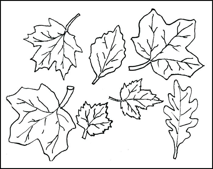 700x555 Printable Leaves Coloring Pages