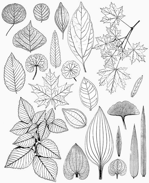 Leaf Patterns Drawing