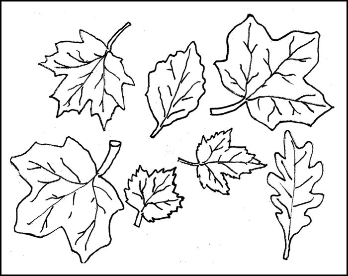 photo about Leaf Template Printable called Leaf Types Drawing at  No cost for specific