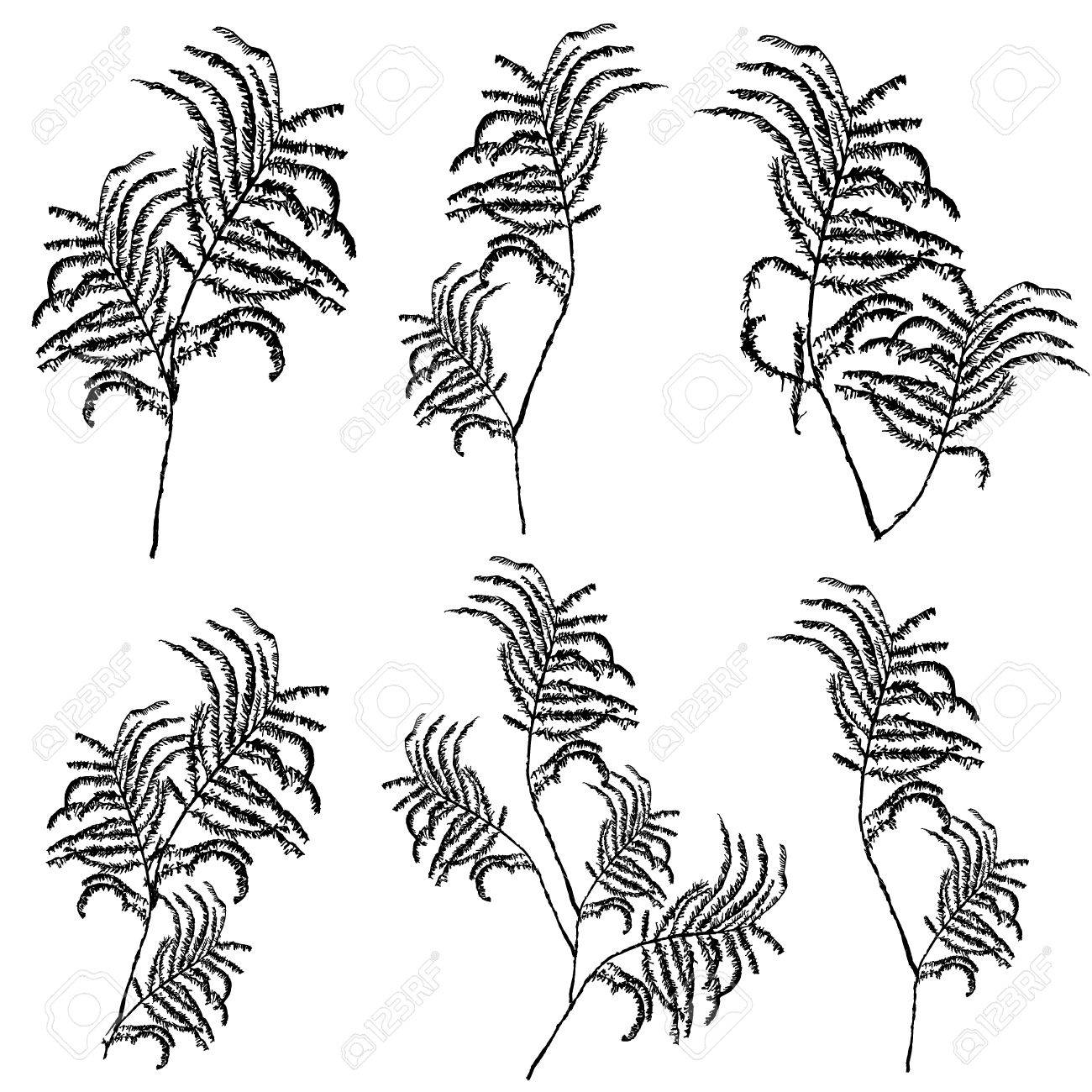 1300x1300 Silhouettes Of Leaves, Botanical Illustration Isolated On White
