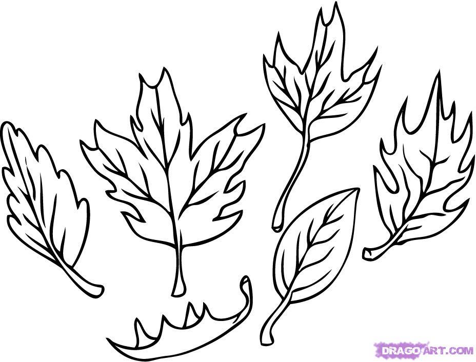 928x706 Drawn Leaves Autumn Leaf