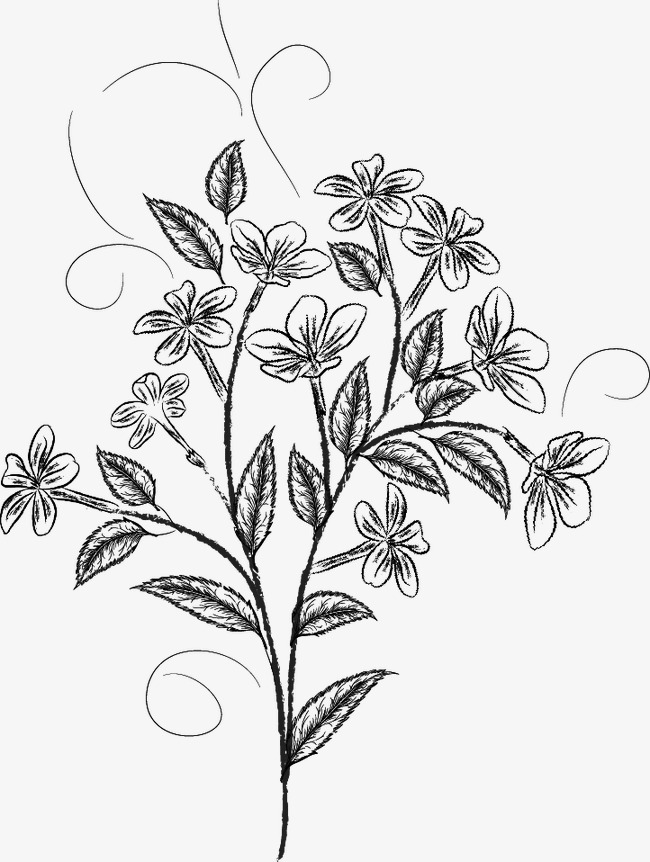 650x862 Flower Sketch, Black, Pencil Drawing, Plant Png Image And Clipart