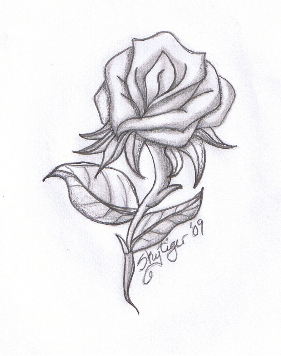 900x1142 Sketch Of Rose With Leaf With Pencil