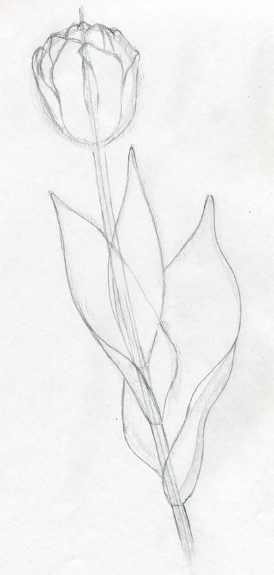 400x840 Draw Tulip Flowers In Few Easy Steps