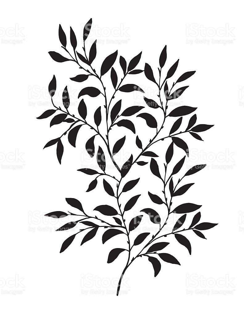 791x1024 Hand Drawn Leaves Branch Hand Drawn And Free Vector Art