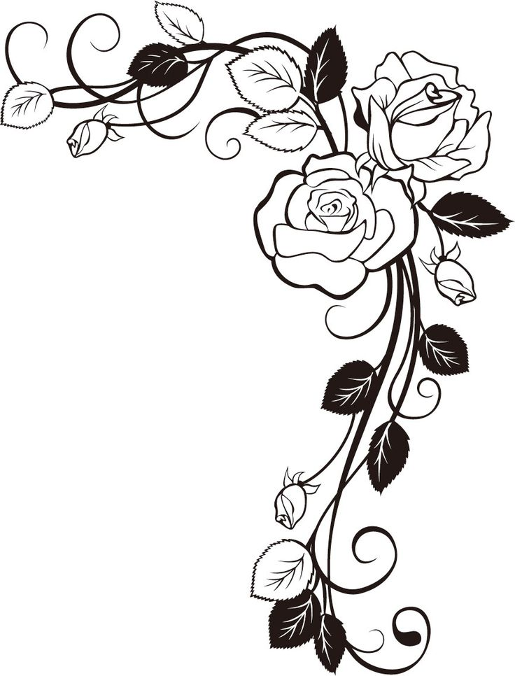 736x966 Rose Clipart Vine Drawing