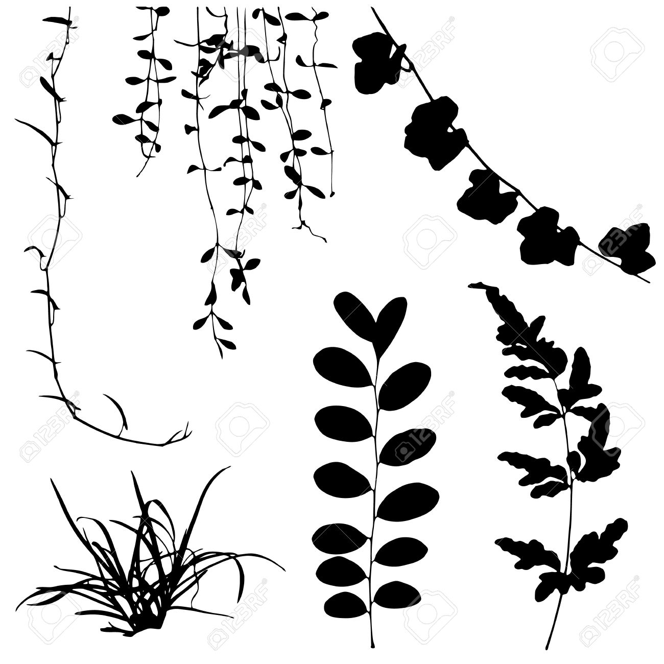 1300x1300 Set Black Silhouettes Of Leaf And Vine Plant Vector Illustration