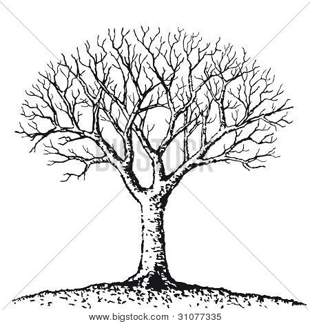 450x470 Leafless Images, Illustrations, Vectors