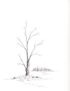 232x300 Leafless Tree Drawings Fine Art America
