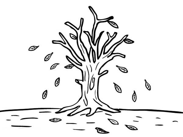 600x448 Leafless Tree In Autumn Leaf Coloring Page