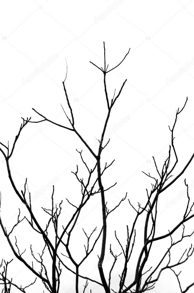680x1023 Leafless Tree Branches Stock Photo Sirylok