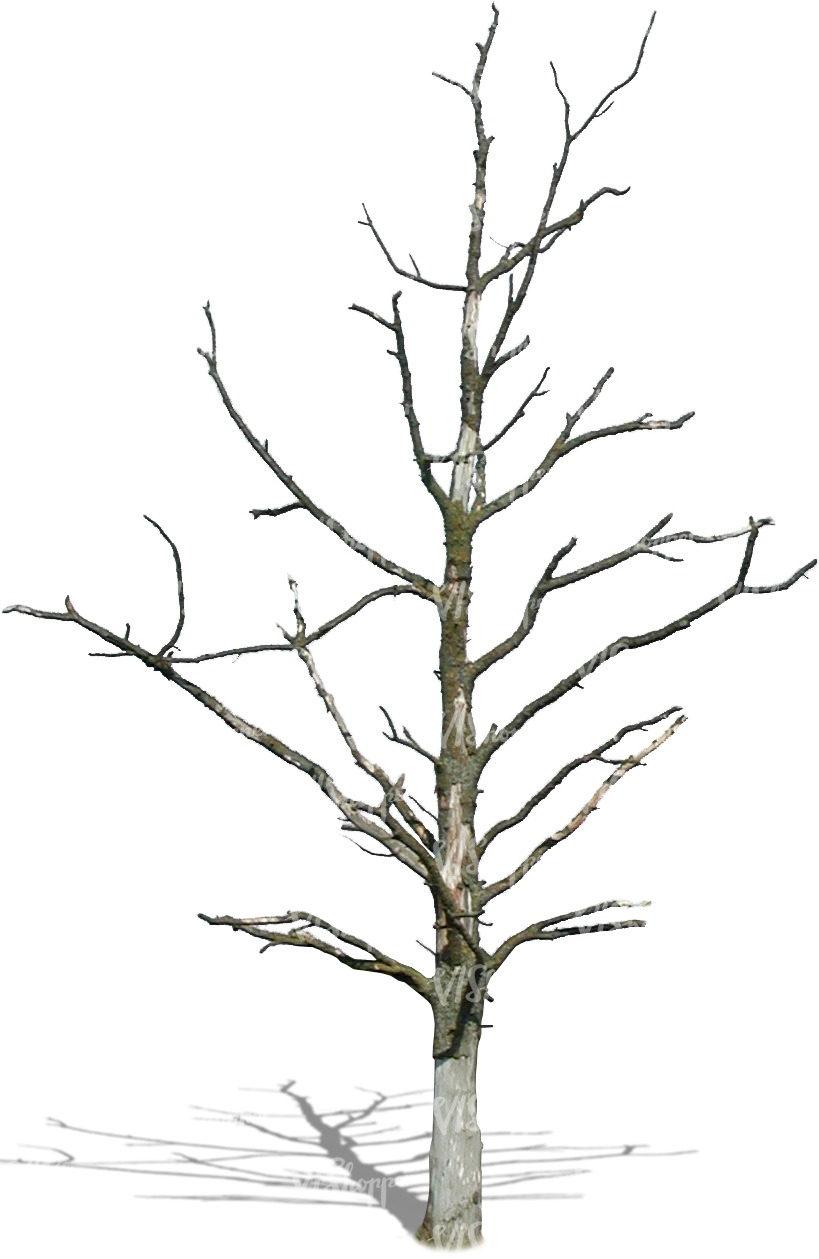 819x1259 Cut Out Small Leafless Tree