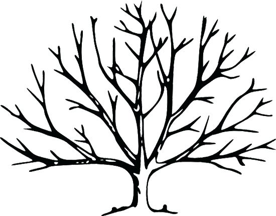 550x430 Beautiful Leafless Tree Coloring Page Online Bare Panda Pages Free
