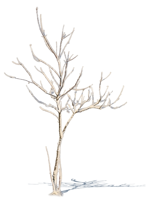 479x650 Small Leafless Tree With Snow