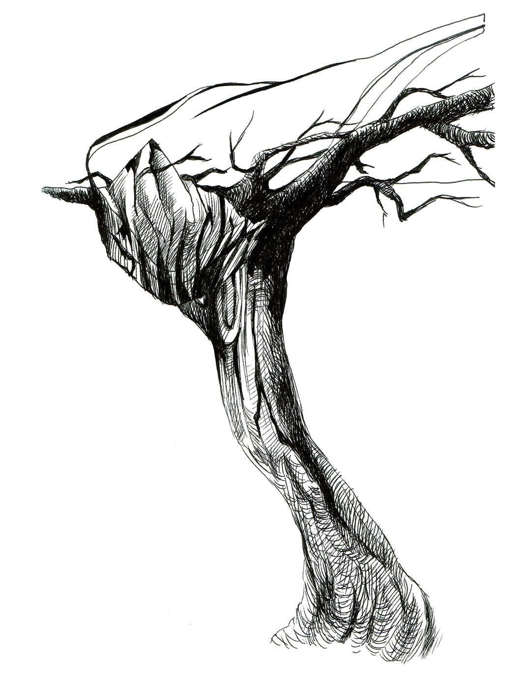1080x1391 Tree Sketch Timothy Tsun