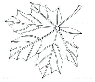 375x325 Coloring Page Leaf Printable Color Page Digital Coloring Sheet Zen
