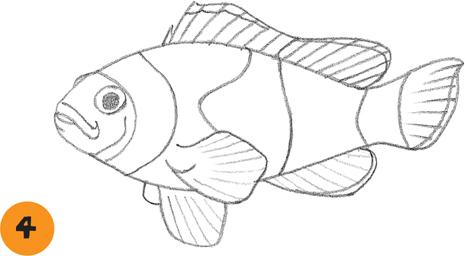 465x256 Clownfish