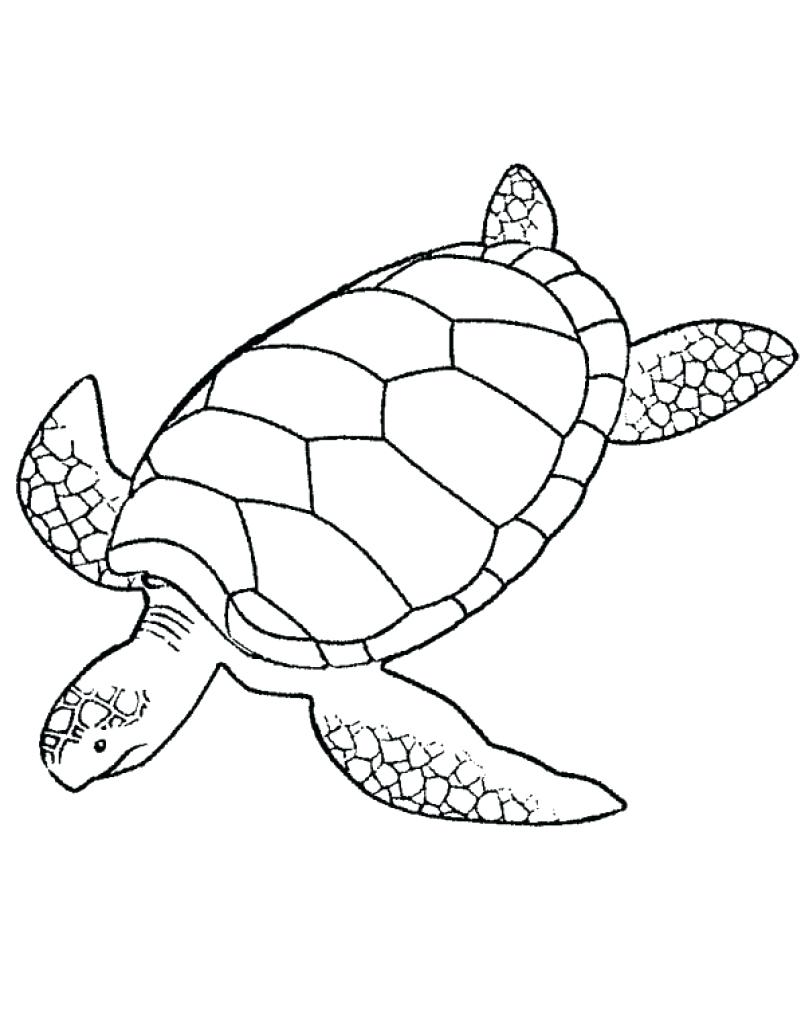 Leatherback Sea Turtle Drawing