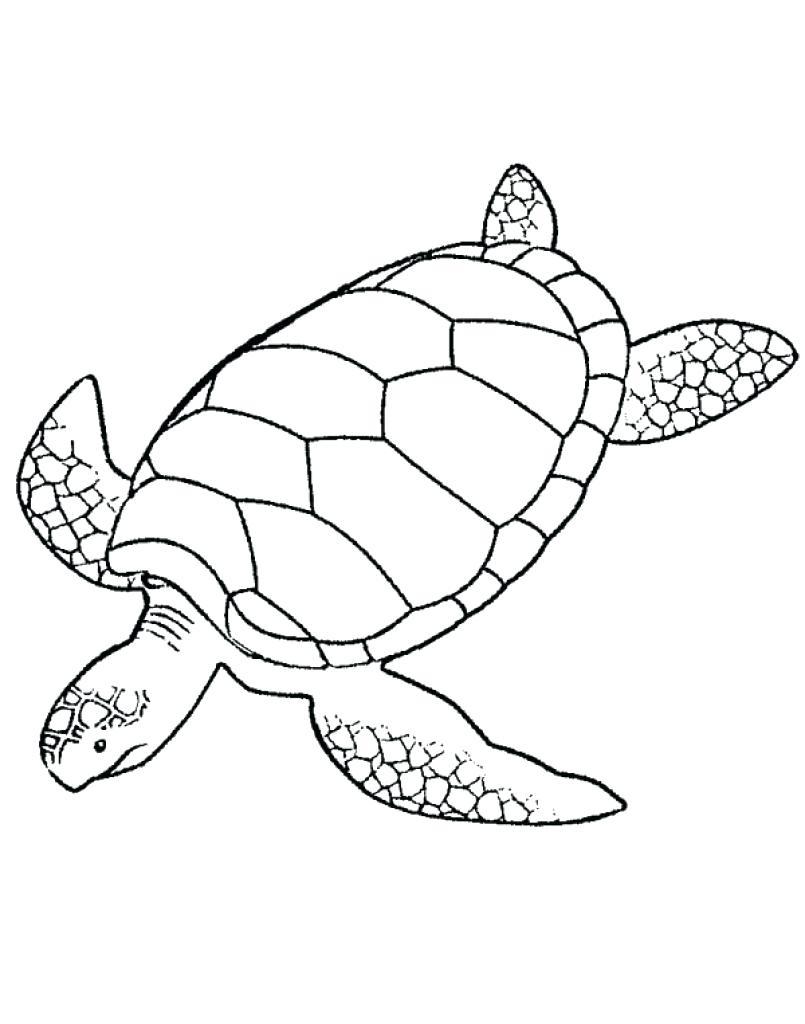 Leatherback Sea Turtle Drawing at GetDrawings | Free download