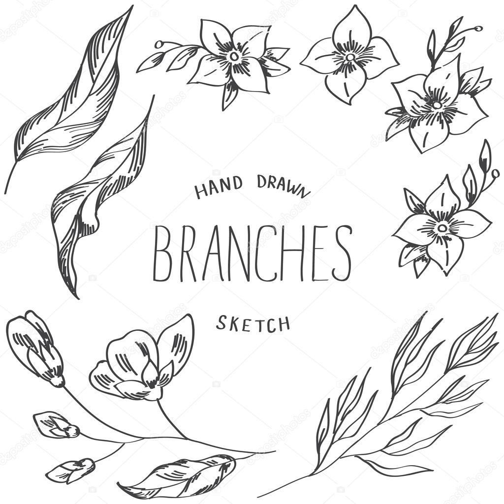 1024x1024 Flowers Of Jasmine, Branches And Leaves Hand Drawn Sketch. Stock