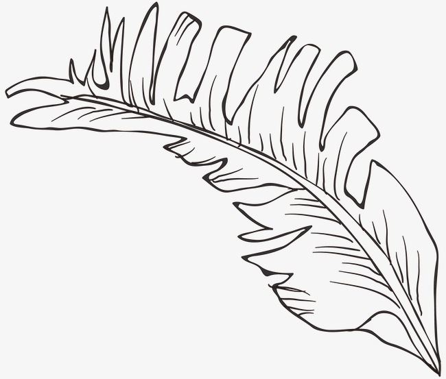 650x553 Line Drawing Leaves, Plant, Line Drawing Graphics, Leaf Png Image