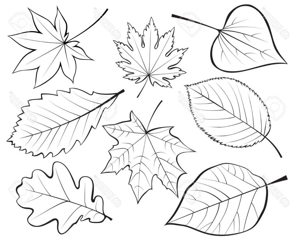 1024x833 Top Set Of Leaves Contour Drawing Stock Vector Pictures