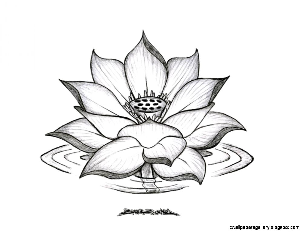 1001x765 Lotus Flower Drawing Tumblr Wallpapers Gallery