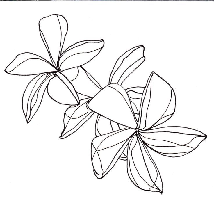 736x691 Flower Line Drawing