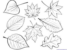 288x216 Drawn Leaf Falling Leaf