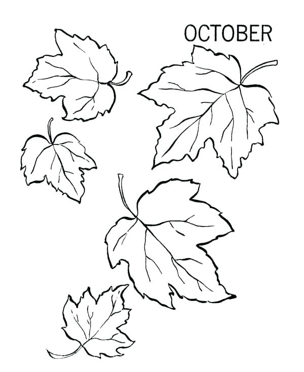 600x734 Fall Leaf Coloring Pages Autumn Leaves Coloring Pages Preschool