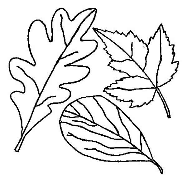 600x593 Drawing Of Fall Leaf Coloring Page