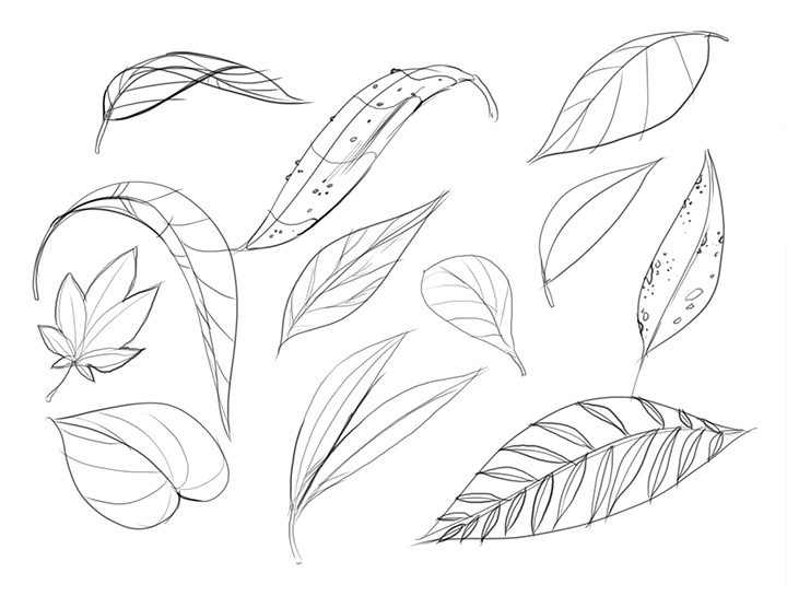 720x545 Lesson 3 Drawing Plants
