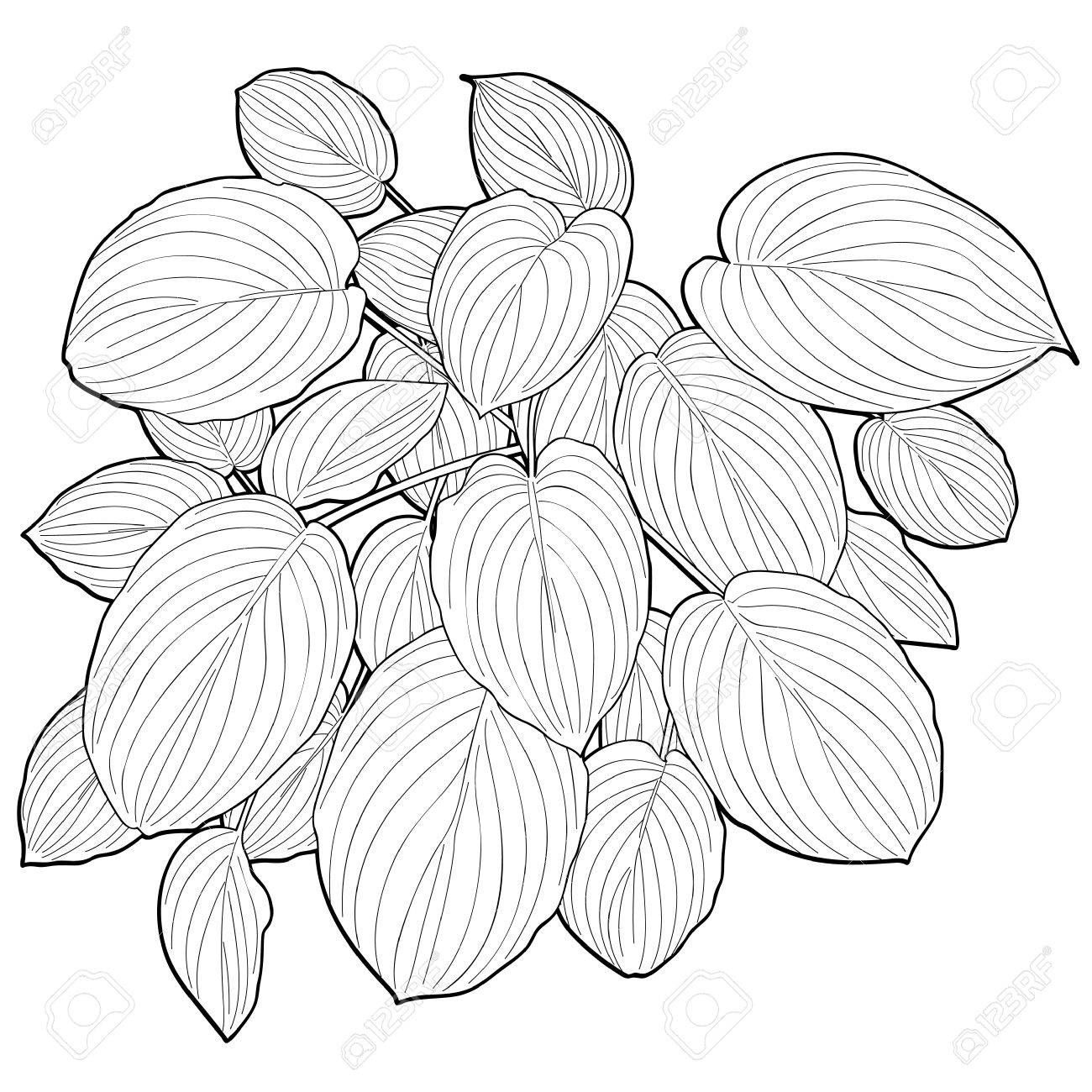 1300x1300 Big Leaves, Leaf Line Drawing Royalty Free Cliparts, Vectors,
