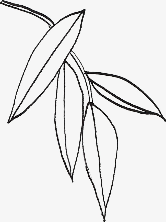 650x868 Line Drawing Leaves, Black, Line, Line Drawing Of Plant Png Image