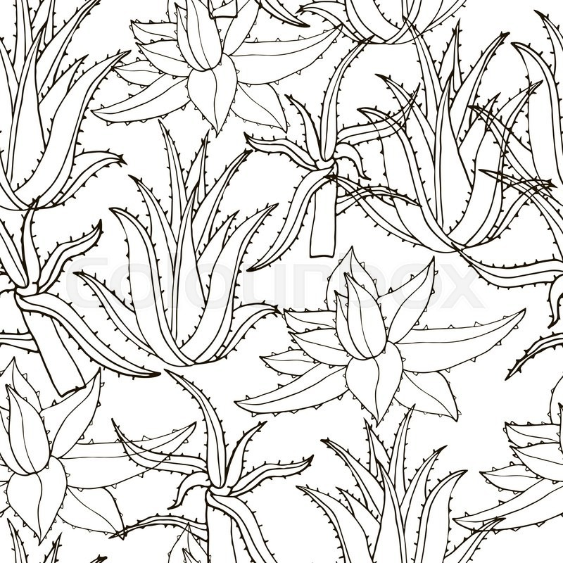 800x800 Seamless Vector Pattern With Aloe Vera. Creative Hand Drawn