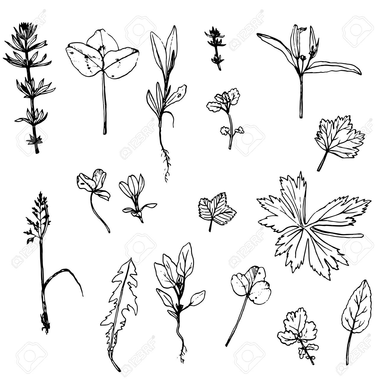 1300x1300 Set Of Ink Drawing Wild Flowers, Leaves And Herbs,drawing Wild