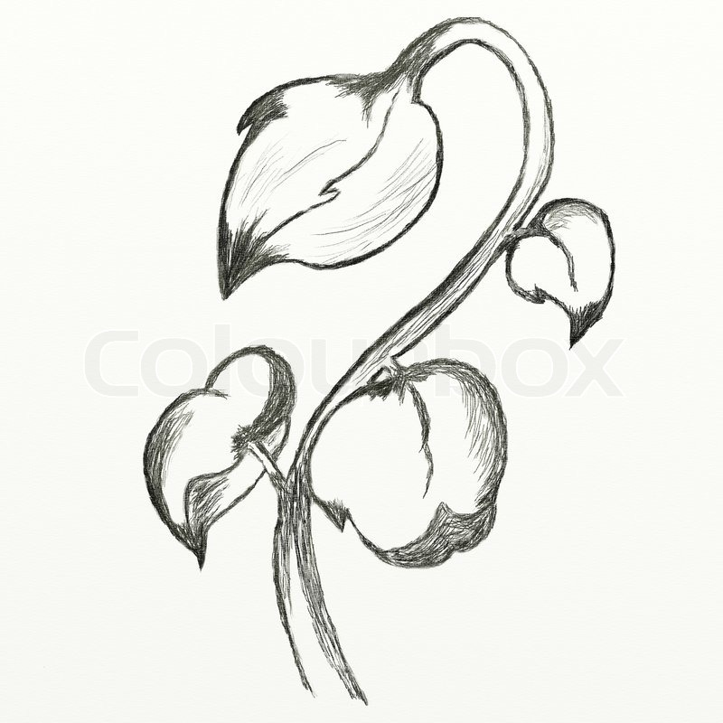 800x800 Flowers Sketch. This Is Picture Drawed With Pencil. Stock Photo
