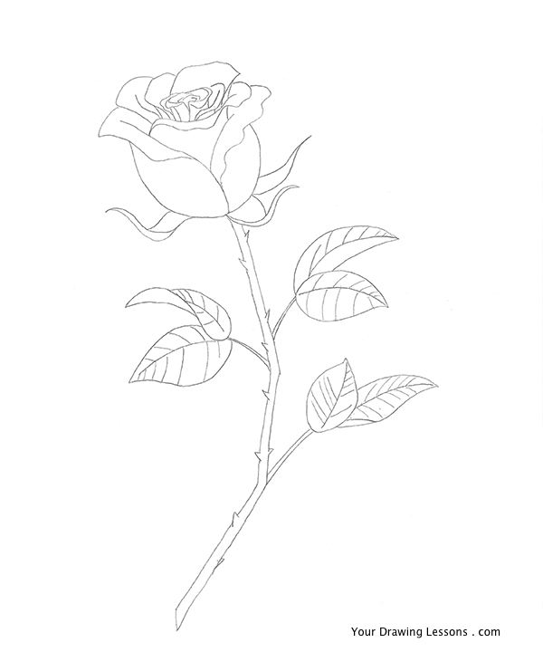 600x741 How To Draw A Rose Your Drawing Lessons