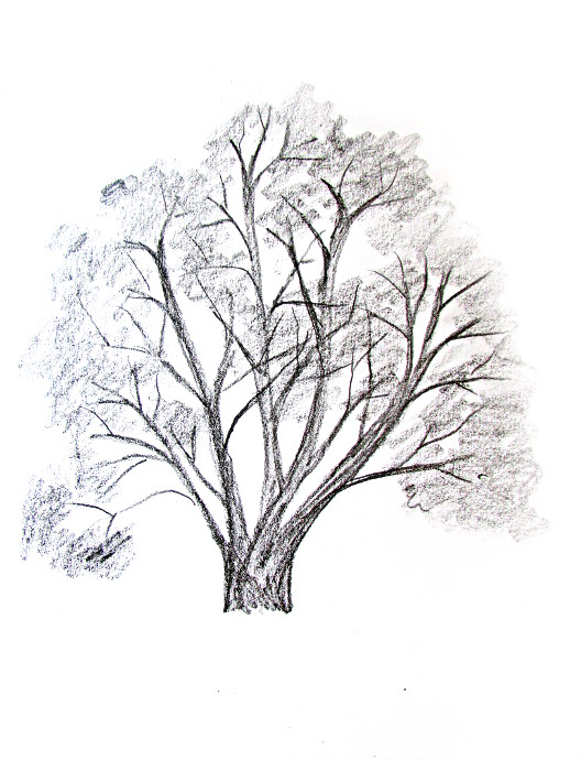 528x690 How To Draw A Tree