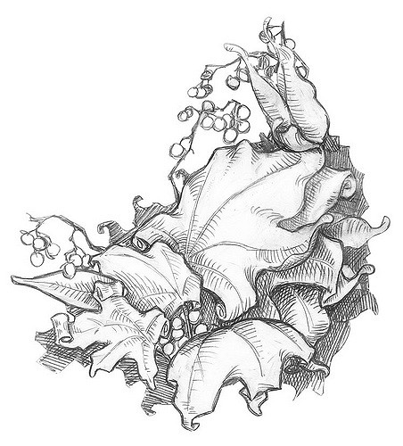 452x500 Leaves Pencil Drawing Ben Northern