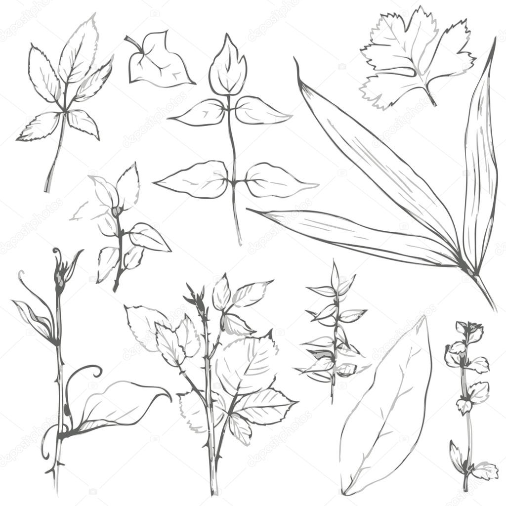 1024x1024 Set Of Pencil Drawing Herbs And Leaves Stock Vector