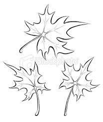 207x244 Pencil Drawings Of Leaves