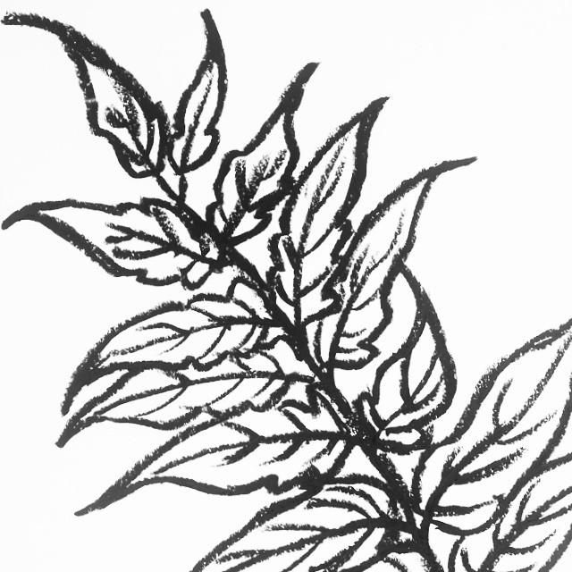 640x640 Berlin Leaf Sketch Detail. Oil Pastel On Paper. art