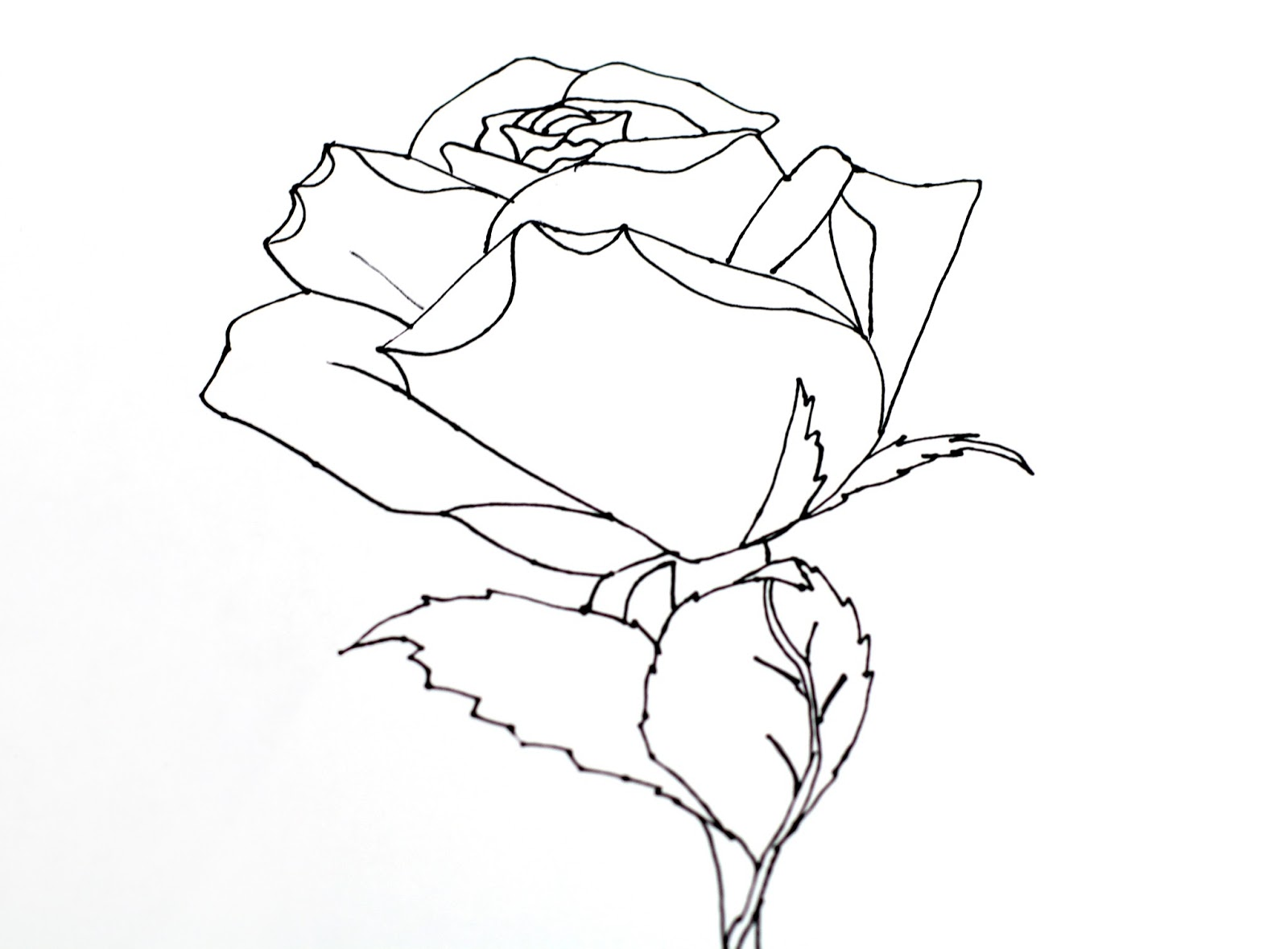 1600x1180 Best Photos Of Rose Leaves Drawing