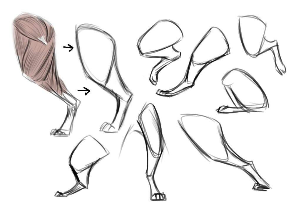 1024x723 Anatomy Tips Art Amino