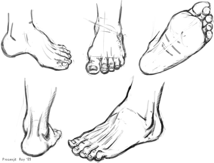 719x548 Foot And Ankle Anatomy For Artists Prosenjit's Leg Lift