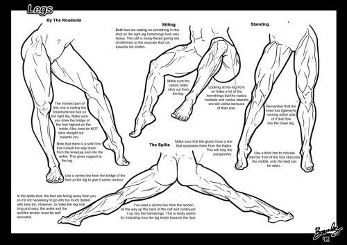 Leg Muscle Drawing