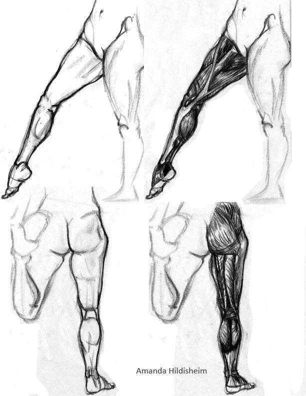 612x792 Leg Muscles Rawr By Amenduhh