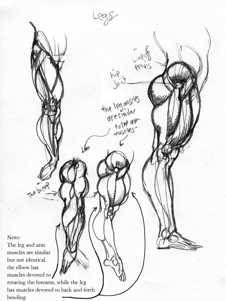 752x1000 Anatomy Leg2 By Jebriodo