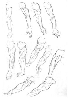 Leg Muscles Drawing